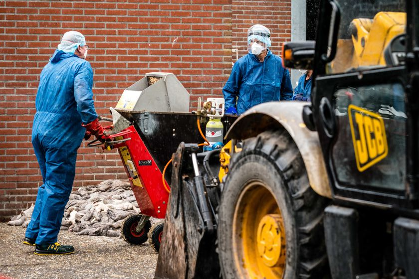Mink farm infected with the coronavirus in the Netherlands