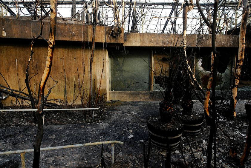 A burned monkey house is pictured in the zoo of Krefeld