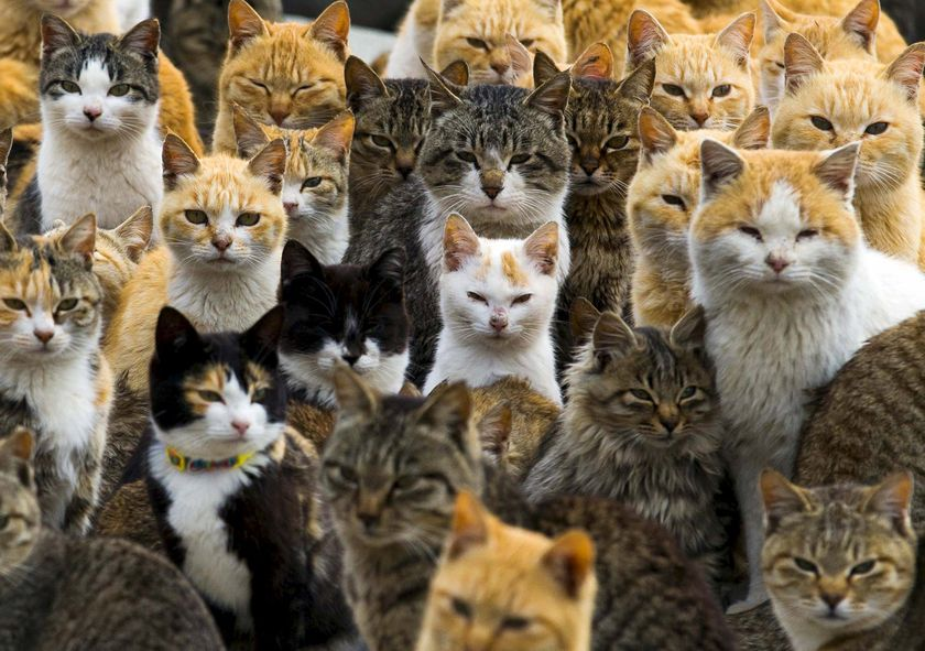 """Cats crowd the harbour on Aoshima Island in the Ehime prefecture in southern Japan, February 25, 2015. An army of cats rules the remote island in southern Japan, curling up in abandoned houses or strutting about in a fishing village that is overrun with felines outnumbering humans six to one.  REUTERS/Thomas PeterSEARCH """"YEAREND ANIMALS"""" FOR ALL 20 IMAGES"""